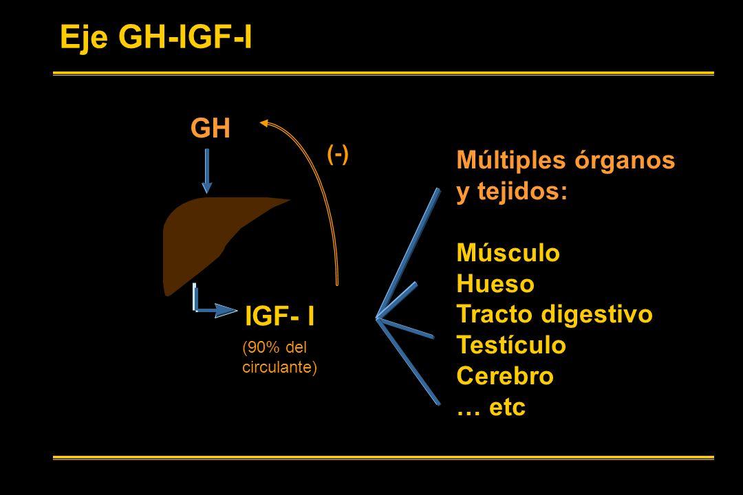 Eje GH-IGF-I GH IGF- I Múltiples órganos y tejidos: Músculo Hueso