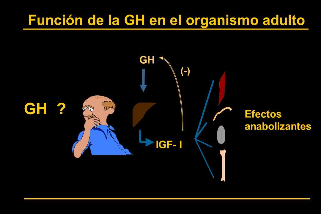 GH Función de la GH en el organismo adulto GH Efectos anabolizantes