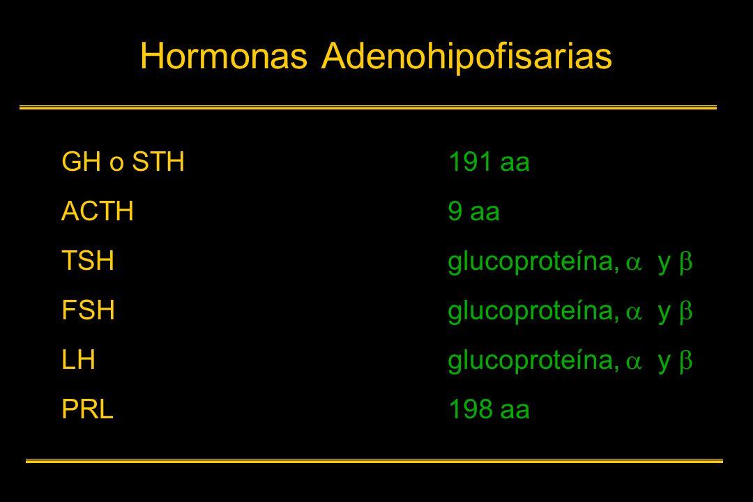Hormonas Adenohipofisarias