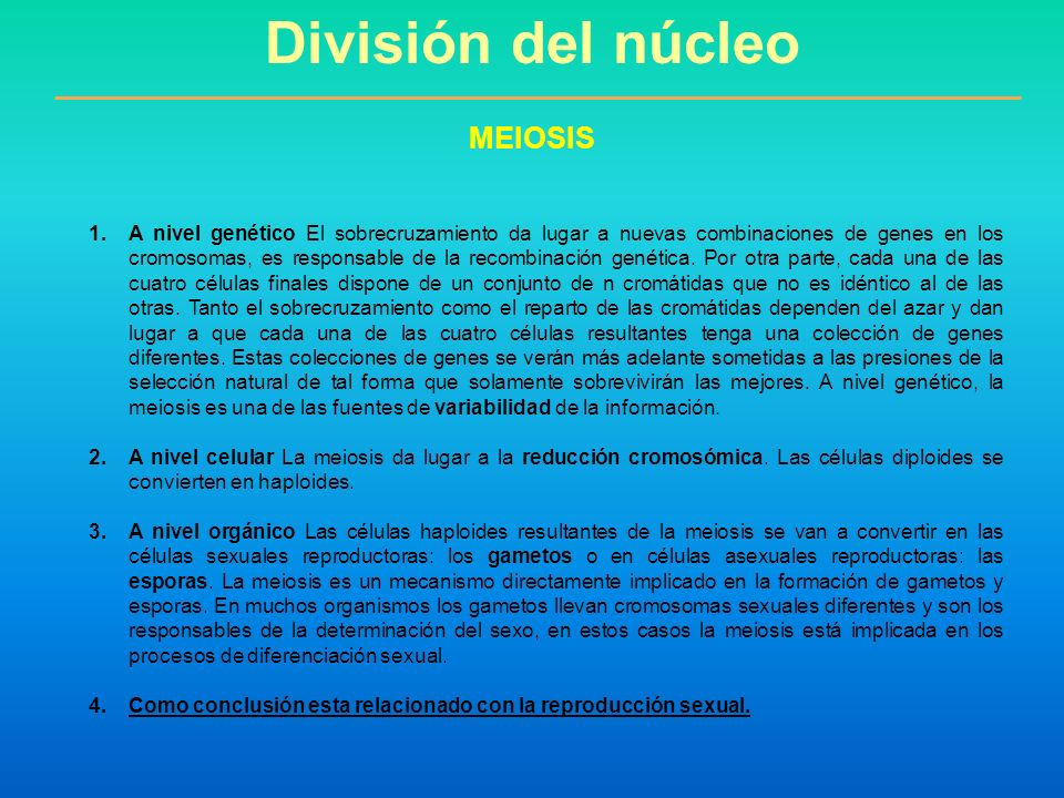 División del núcleo MEIOSIS