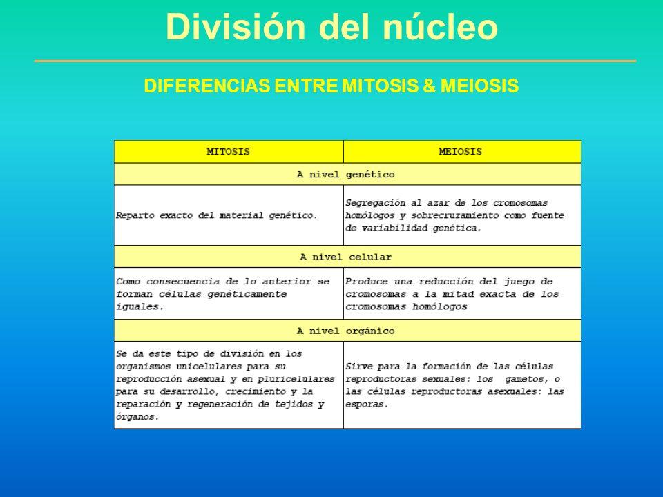 DIFERENCIAS ENTRE MITOSIS & MEIOSIS