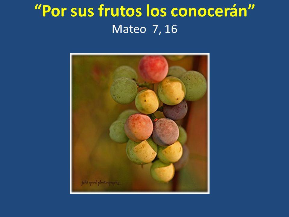 Por sus frutos los conocerán Mateo 7, 16