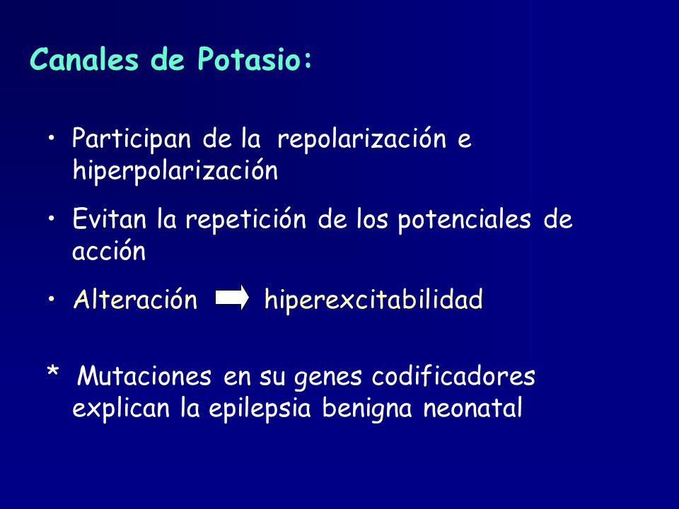 Canales de Potasio: Participan de la repolarización e hiperpolarización. Evitan la repetición de los potenciales de acción.
