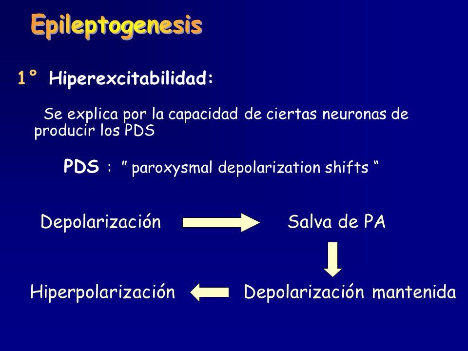 Epileptogenesis 1° Hiperexcitabilidad: