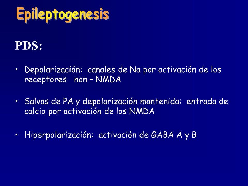 Epileptogenesis PDS: Depolarización: canales de Na por activación de los receptores non – NMDA.
