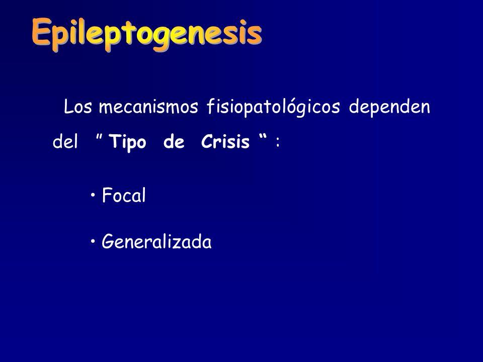 Epileptogenesis Los mecanismos fisiopatológicos dependen
