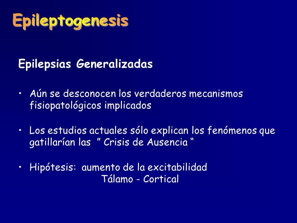 Epileptogenesis Epilepsias Generalizadas