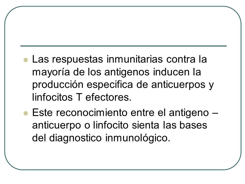 Las respuestas inmunitarias contra la mayoría de los antigenos inducen la producción especifica de anticuerpos y linfocitos T efectores.