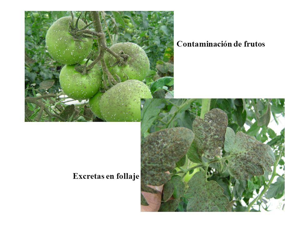 Contaminación de frutos