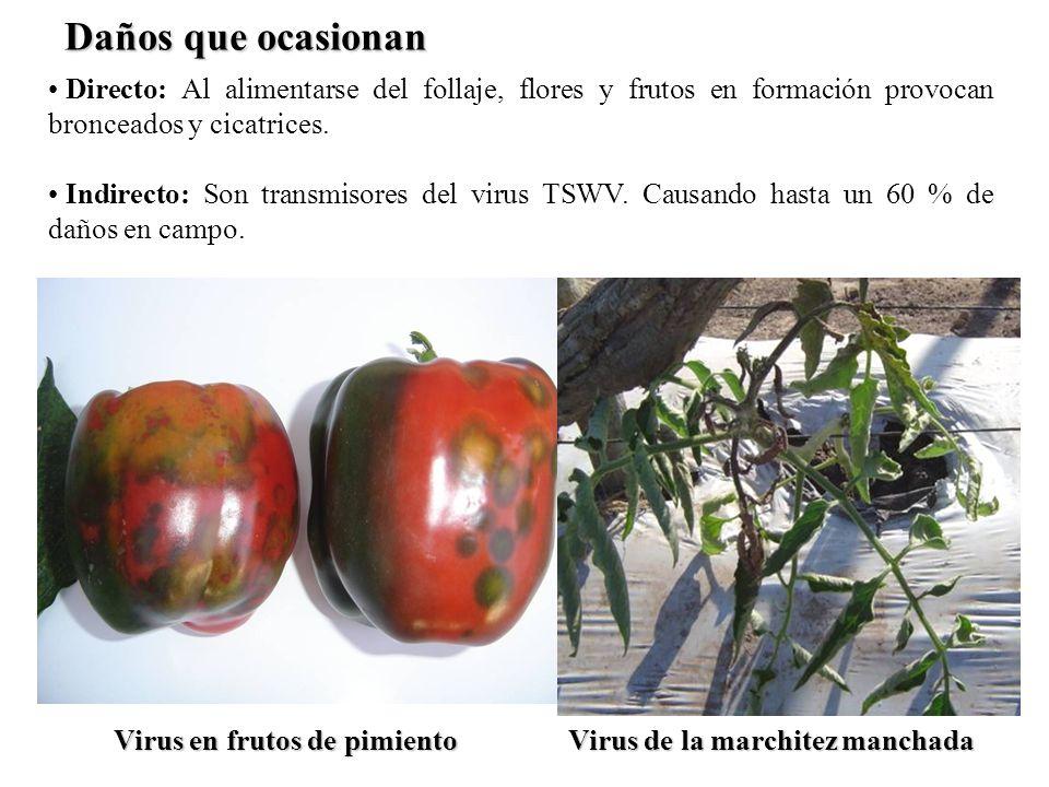Daños que ocasionanDirecto: Al alimentarse del follaje, flores y frutos en formación provocan bronceados y cicatrices.