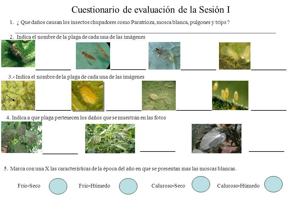 Cuestionario de evaluación de la Sesión I
