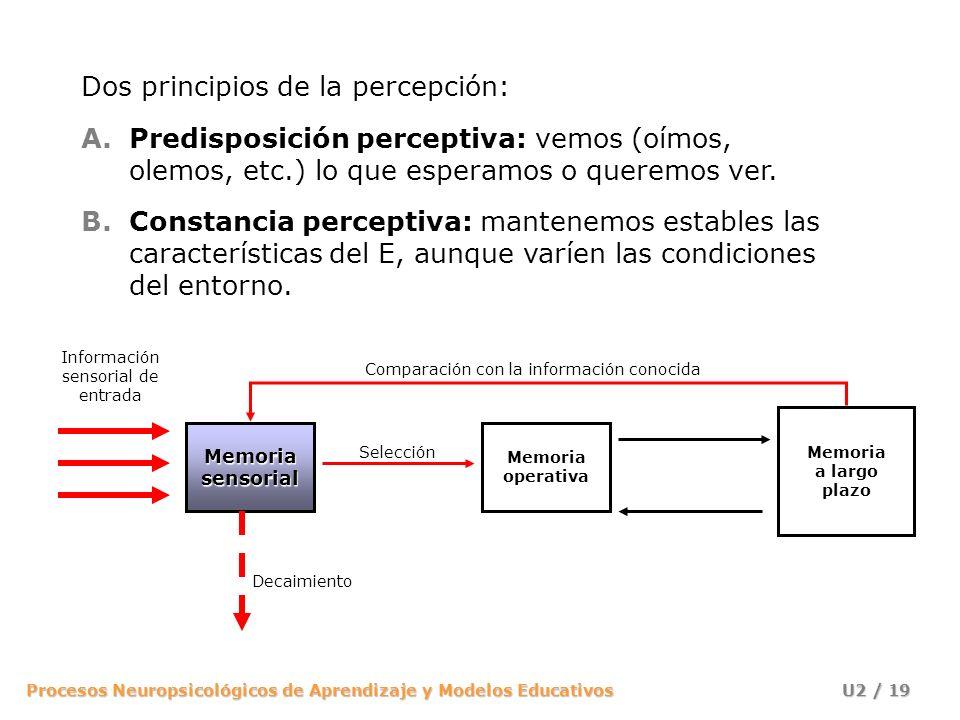 Dos principios de la percepción: