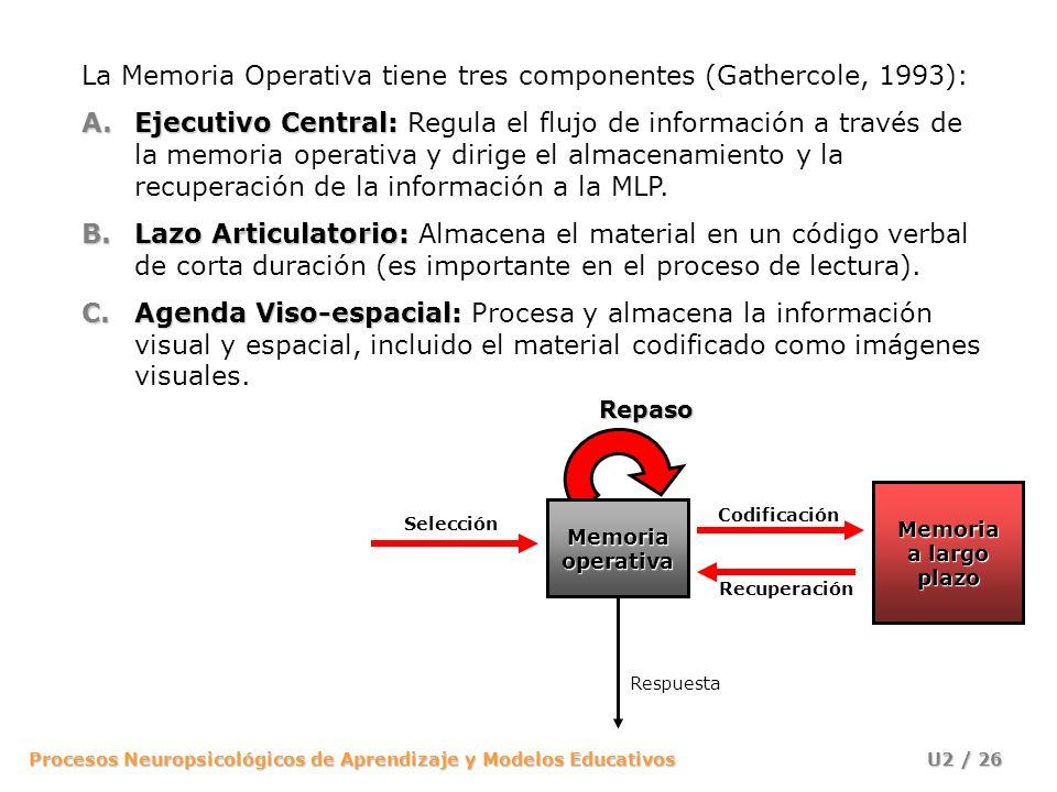 La Memoria Operativa tiene tres componentes (Gathercole, 1993):
