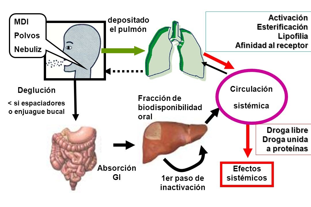 esteroides inhalados para asma
