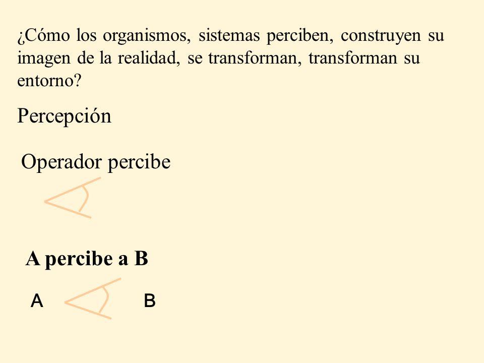 Percepción Operador percibe A percibe a B