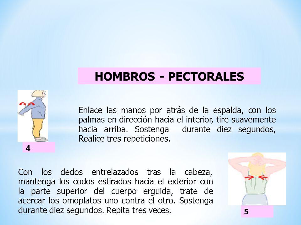 HOMBROS - PECTORALES