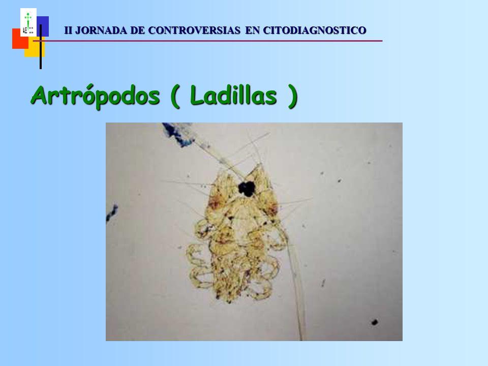 II JORNADA DE CONTROVERSIAS EN CITODIAGNOSTICO