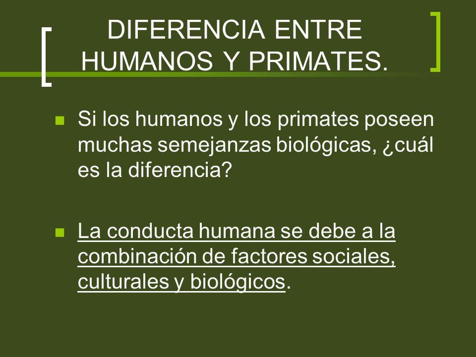 DIFERENCIA ENTRE HUMANOS Y PRIMATES.
