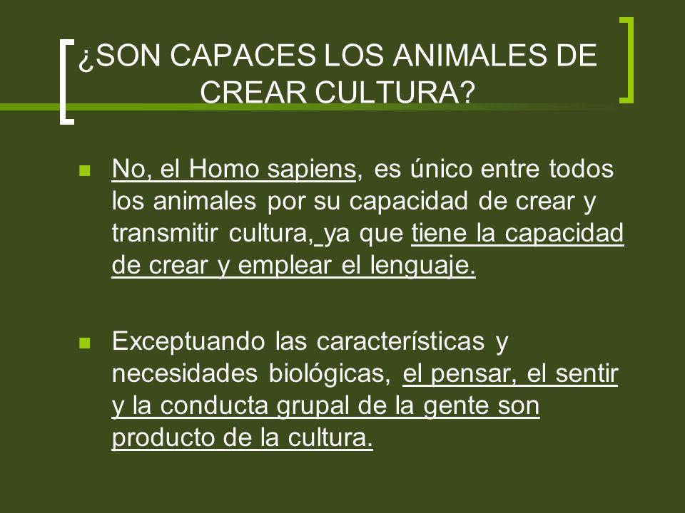¿SON CAPACES LOS ANIMALES DE CREAR CULTURA