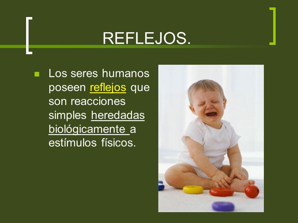 REFLEJOS.Los seres humanos poseen reflejos que son reacciones simples heredadas biológicamente a estímulos físicos.