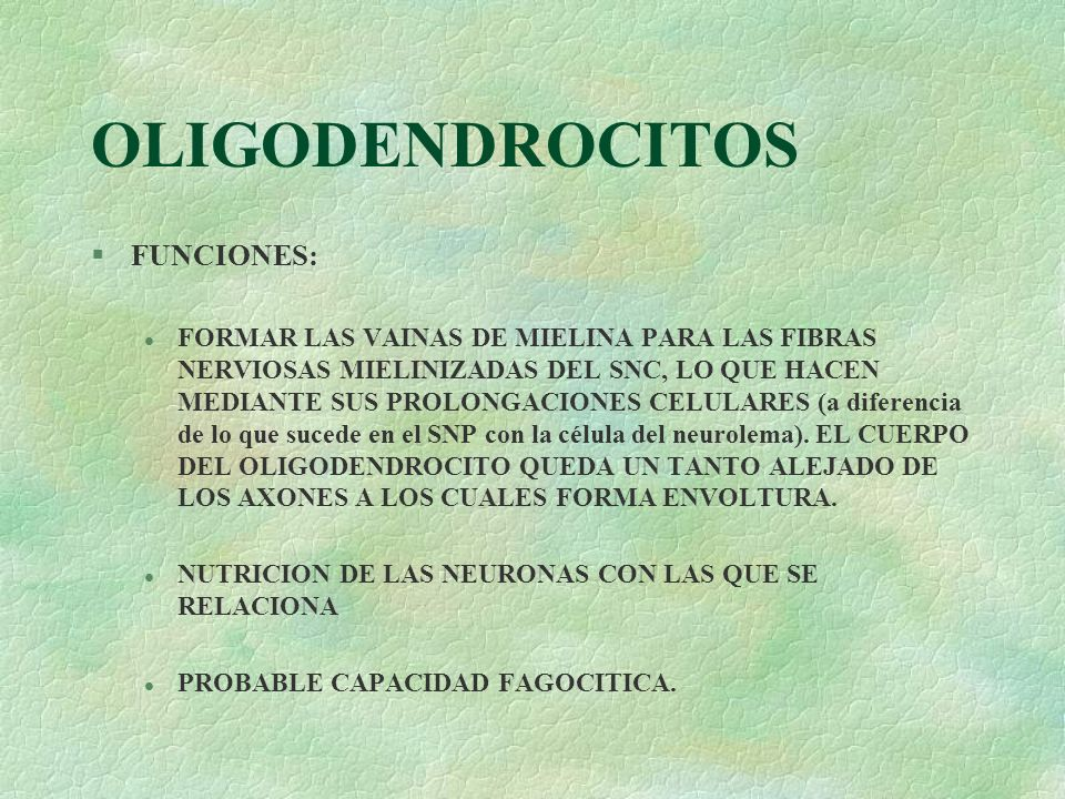 OLIGODENDROCITOS FUNCIONES: