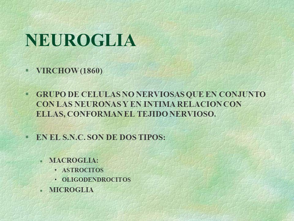 NEUROGLIAVIRCHOW (1860) GRUPO DE CELULAS NO NERVIOSAS QUE EN CONJUNTO CON LAS NEURONAS Y EN INTIMA RELACION CON ELLAS, CONFORMAN EL TEJIDO NERVIOSO.