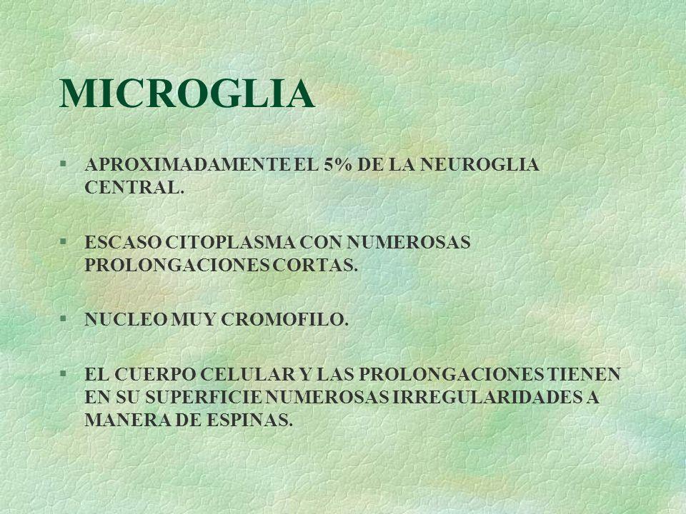 MICROGLIA APROXIMADAMENTE EL 5% DE LA NEUROGLIA CENTRAL.