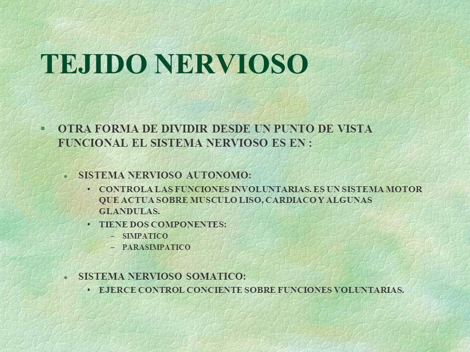 TEJIDO NERVIOSOOTRA FORMA DE DIVIDIR DESDE UN PUNTO DE VISTA FUNCIONAL EL SISTEMA NERVIOSO ES EN : SISTEMA NERVIOSO AUTONOMO: