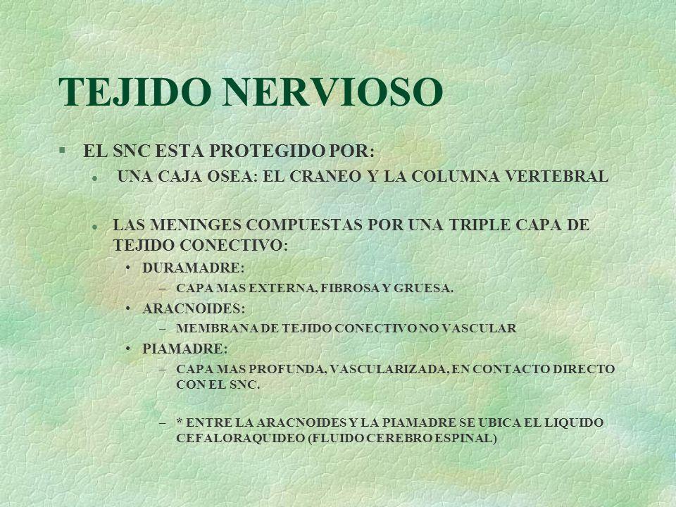 TEJIDO NERVIOSO EL SNC ESTA PROTEGIDO POR: