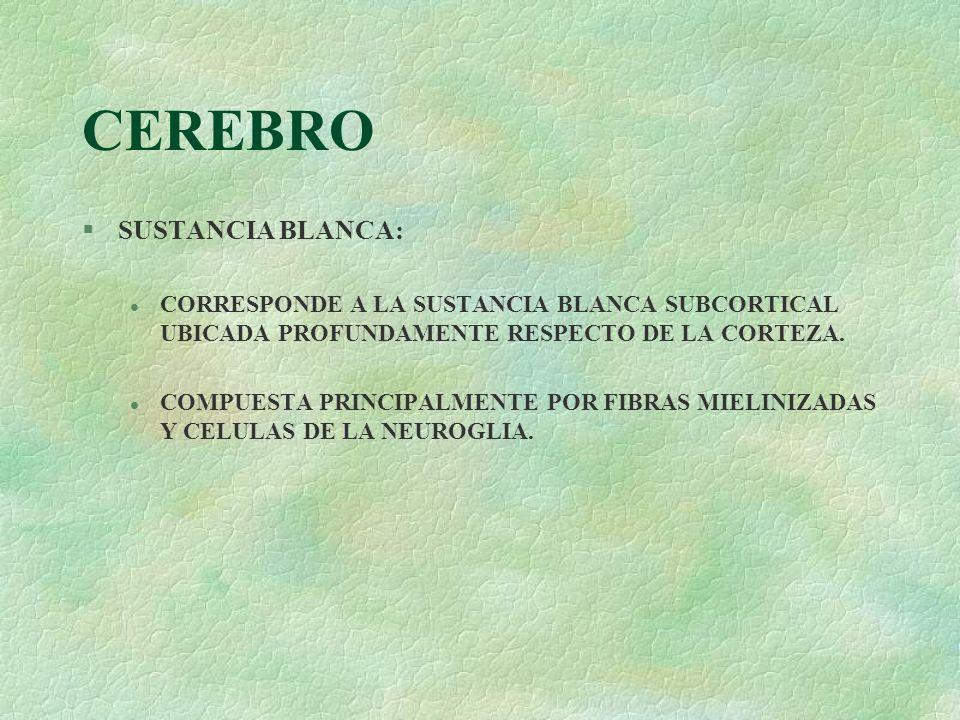 CEREBRO SUSTANCIA BLANCA: