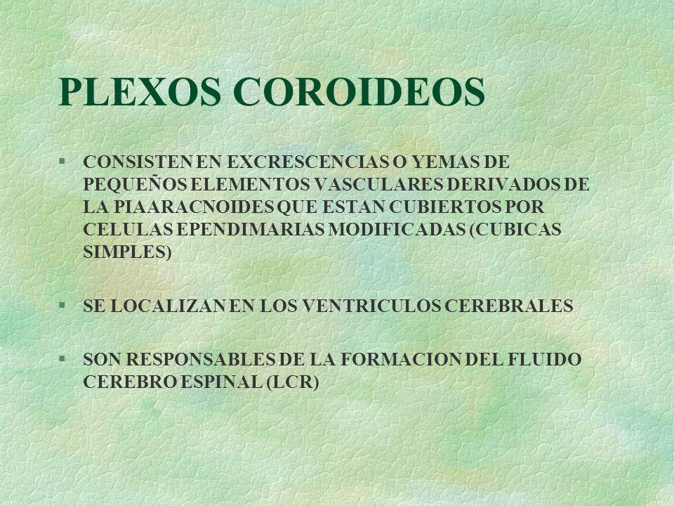 PLEXOS COROIDEOS