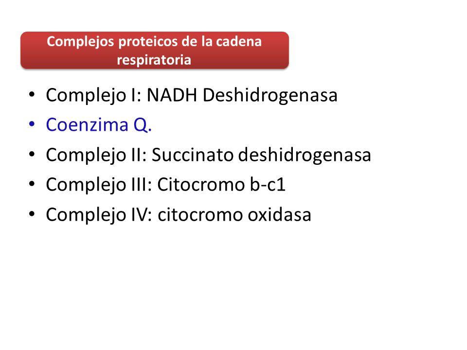 Complejos proteicos de la cadena respiratoria