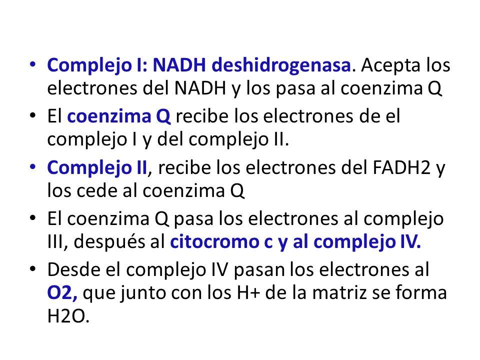 Complejo I: NADH deshidrogenasa