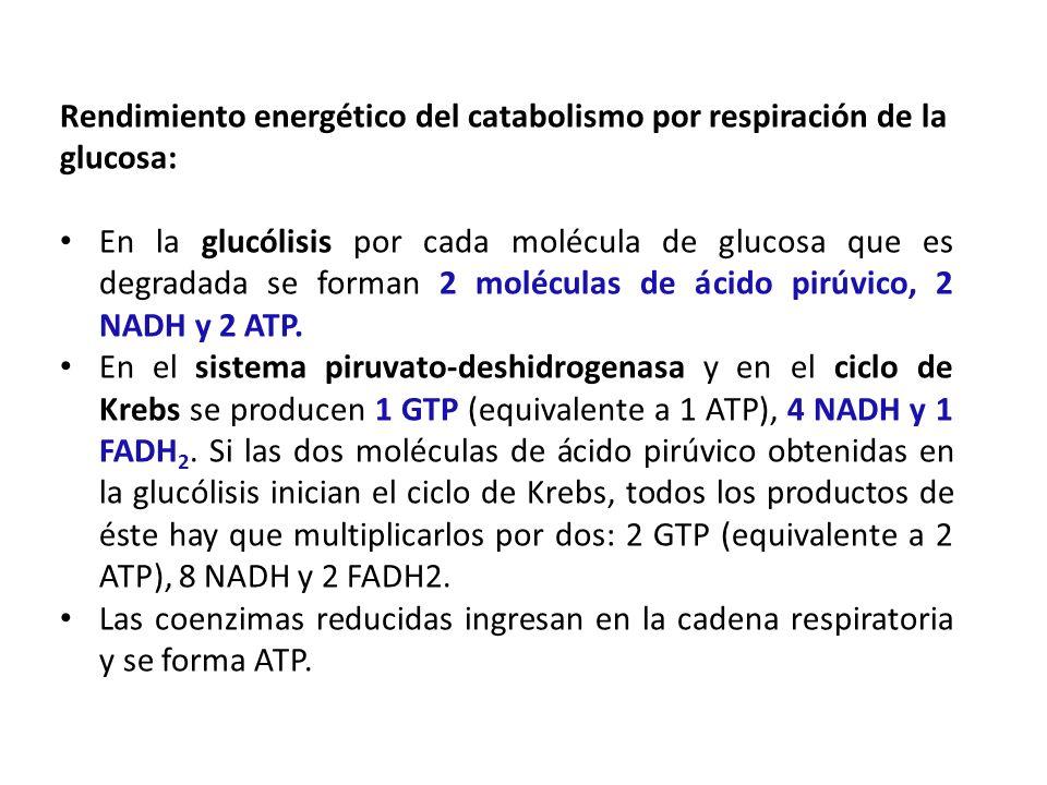 Rendimiento energético del catabolismo por respiración de la glucosa: