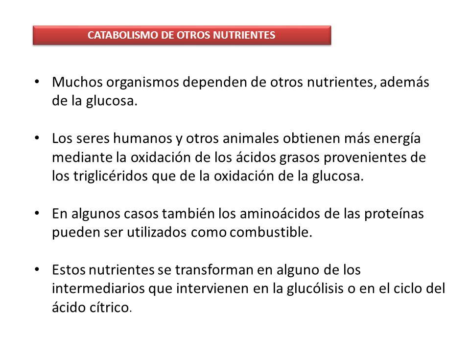 CATABOLISMO DE OTROS NUTRIENTES