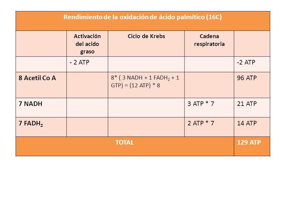 Rendimiento de la oxidación de ácido palmítico (16C) TOTAL