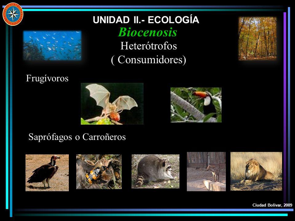 Biocenosis Heterótrofos ( Consumidores) UNIDAD II.- ECOLOGÍA