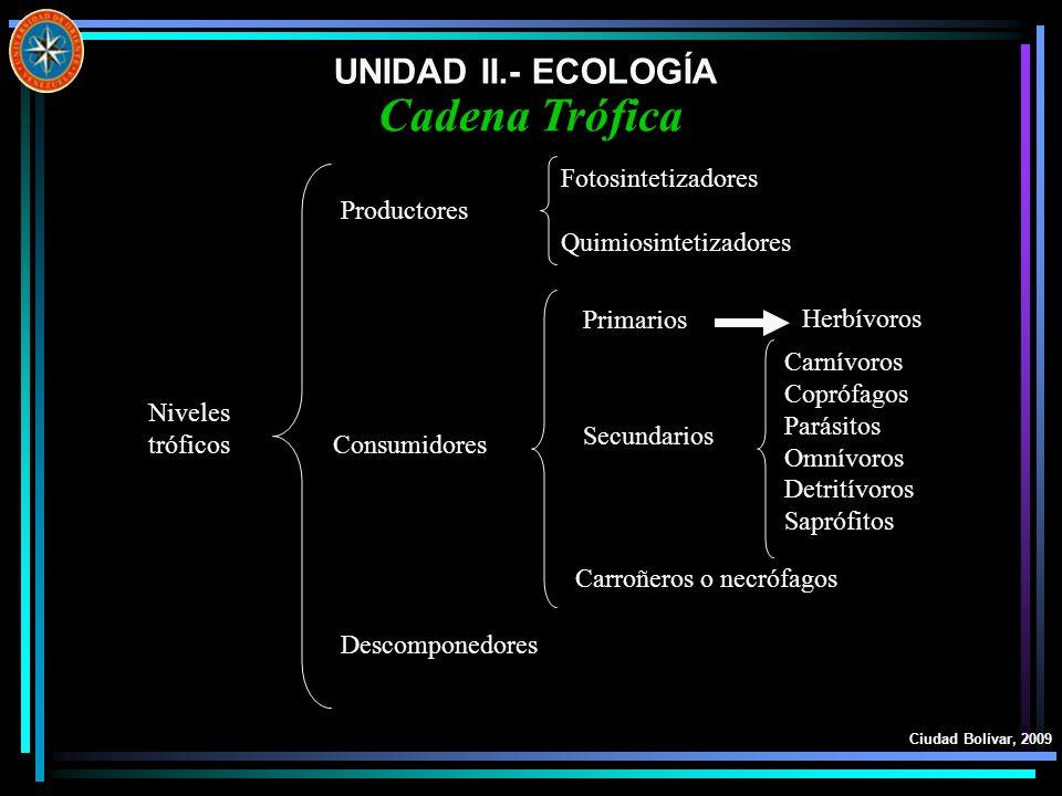 Cadena Trófica UNIDAD II.- ECOLOGÍA Fotosintetizadores Productores