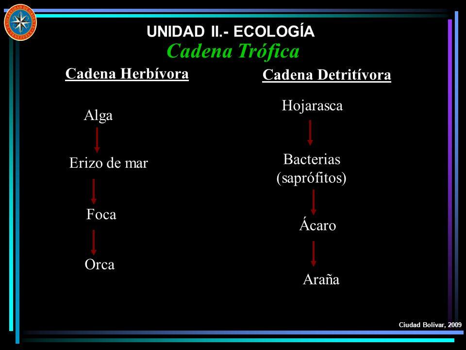 Cadena Trófica UNIDAD II.- ECOLOGÍA Cadena Herbívora