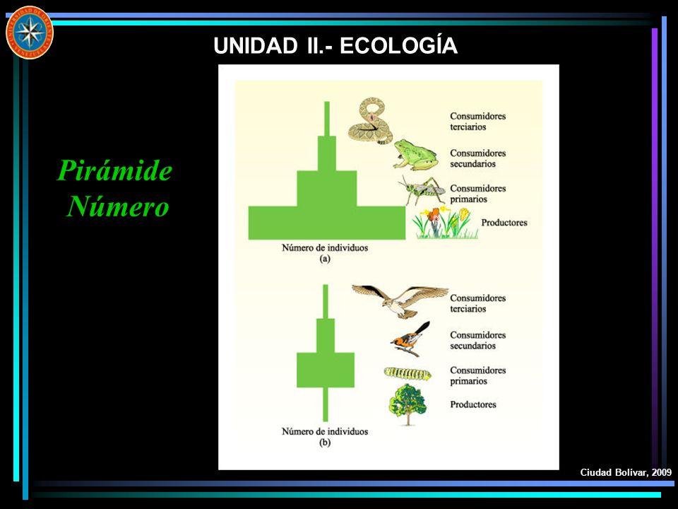 UNIDAD II.- ECOLOGÍA Pirámide Número Ciudad Bolívar, 2009