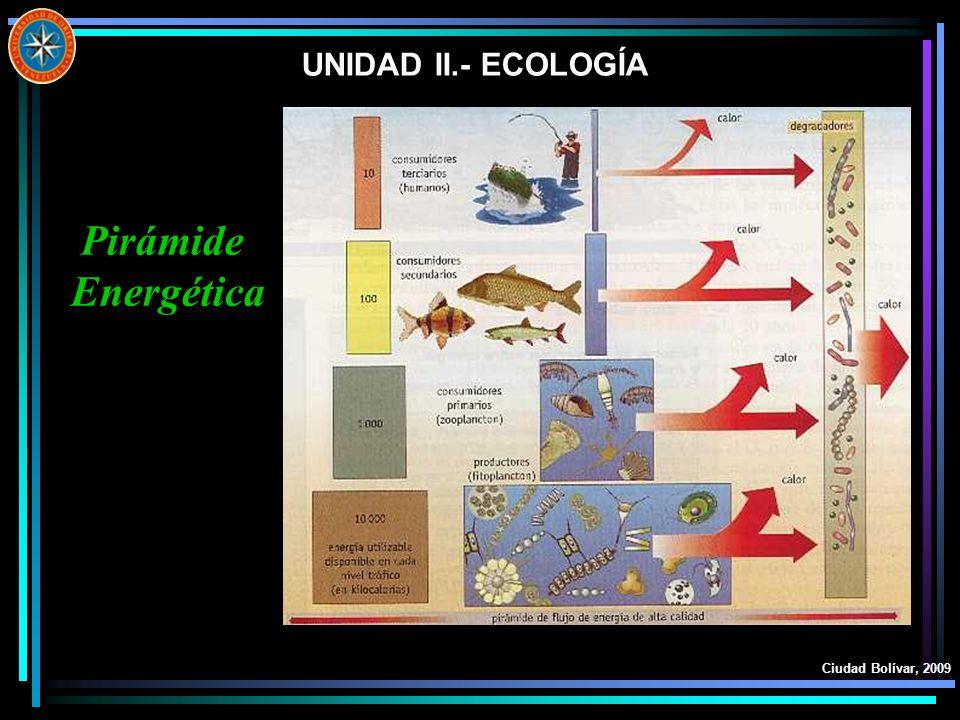 UNIDAD II.- ECOLOGÍA Pirámide Energética Ciudad Bolívar, 2009