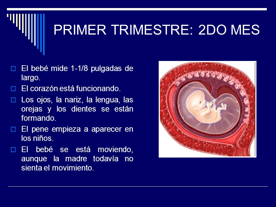 PRIMER TRIMESTRE: 2DO MES