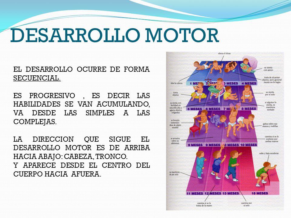 DESARROLLO MOTOR EL DESARROLLO OCURRE DE FORMA SECUENCIAL.