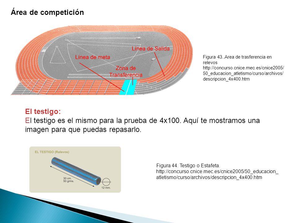 Área de competición El testigo: