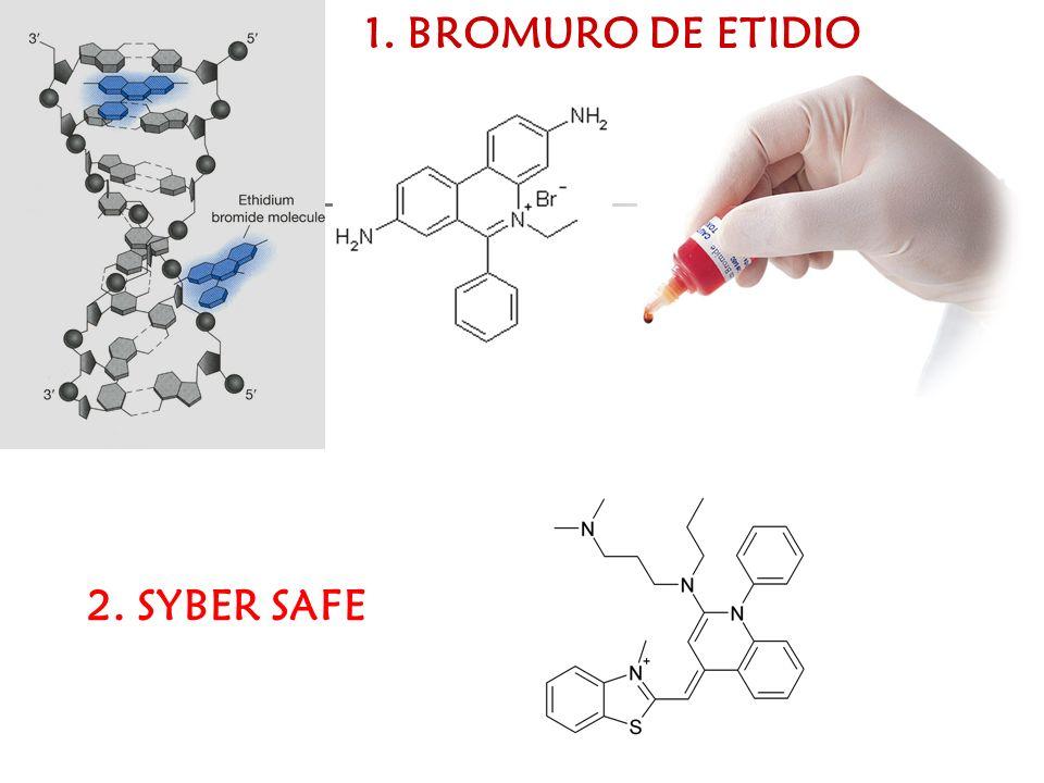 1. BROMURO DE ETIDIO 2. SYBER SAFE