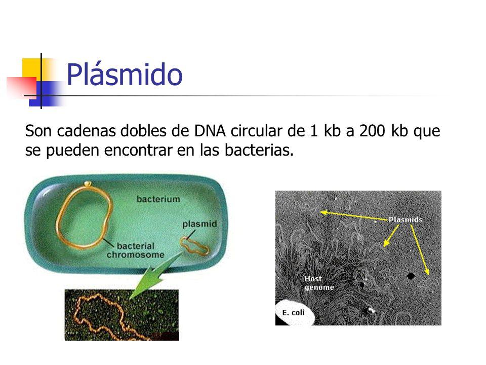 PlásmidoSon cadenas dobles de DNA circular de 1 kb a 200 kb que se pueden encontrar en las bacterias.