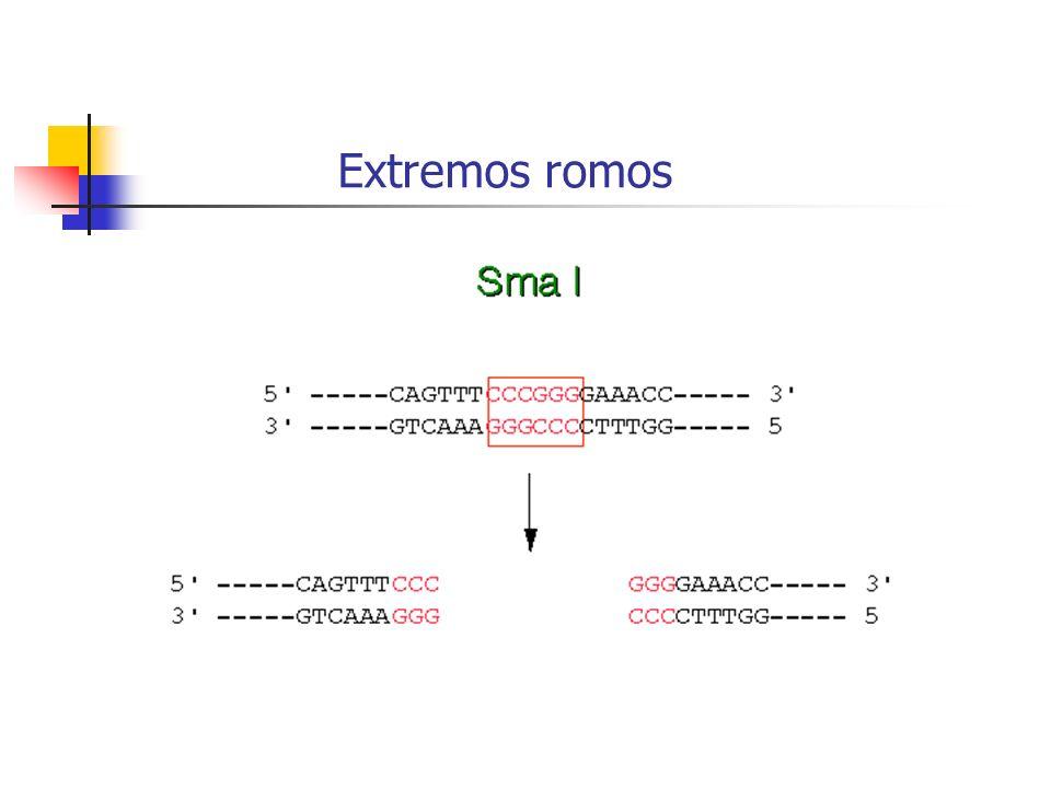 Extremos romos