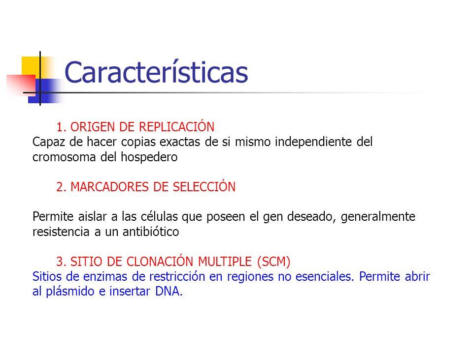 Características 1. ORIGEN DE REPLICACIÓN