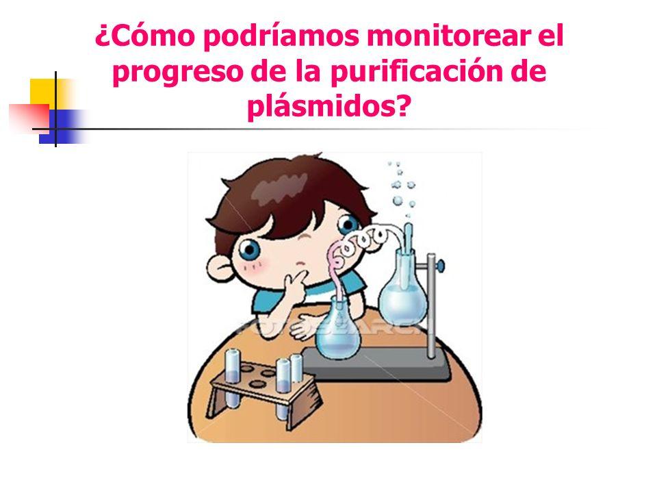 ¿Cómo podríamos monitorear el progreso de la purificación de plásmidos