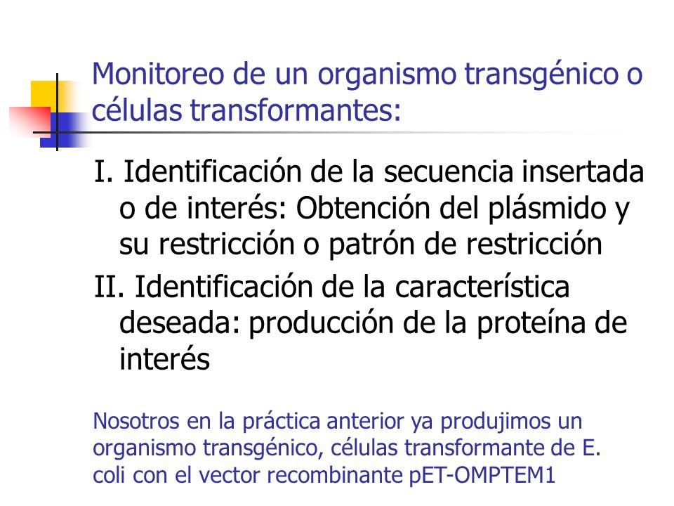 Monitoreo de un organismo transgénico o células transformantes: